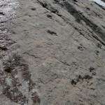 traces de dinosaure à Emosson